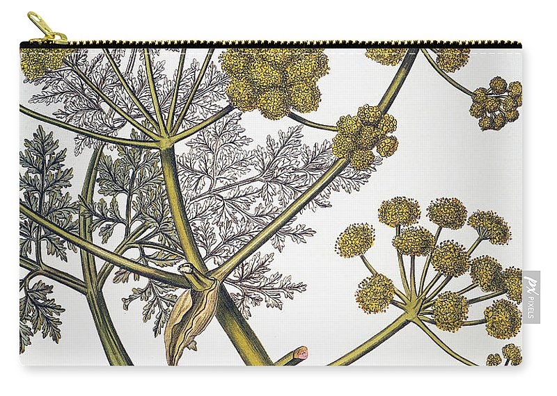 1819 Carry-all Pouch featuring the photograph Herbal: Fennel, 1819 by Granger