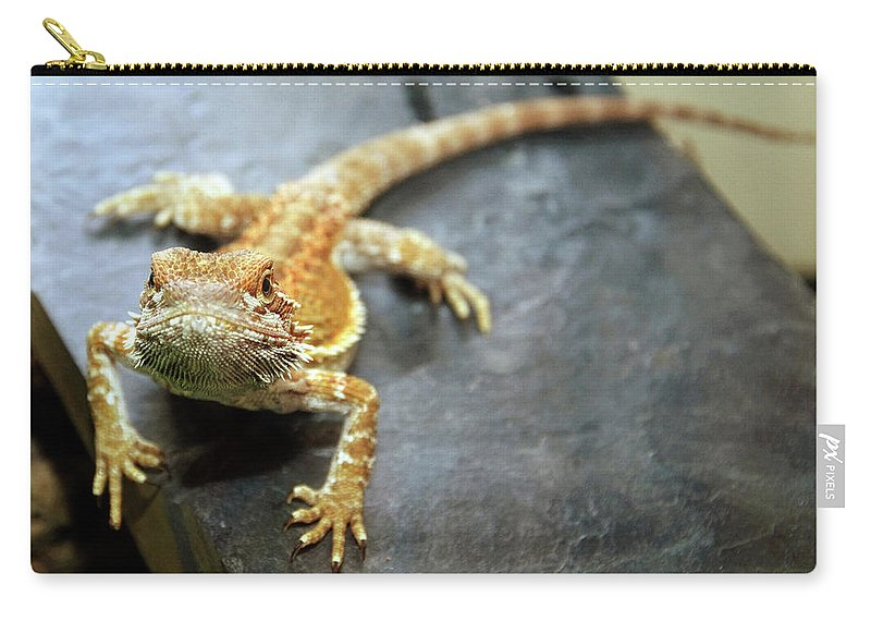 Lizard Carry-all Pouch featuring the photograph Here Lizard Lizard by Andee Design