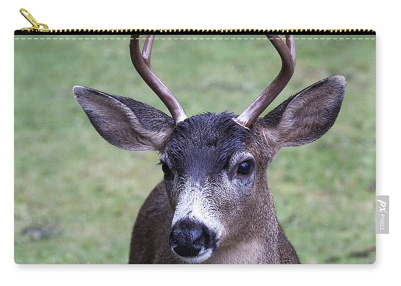 Doug Lloyd Carry-all Pouch featuring the photograph Here Looking At You by Doug Lloyd