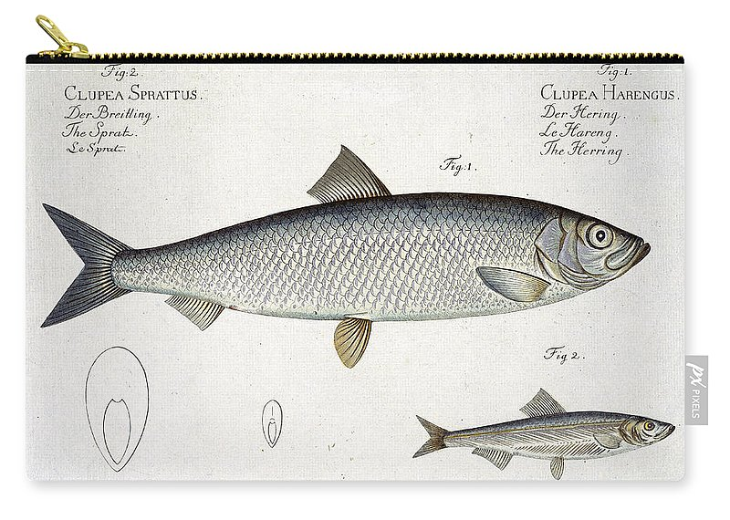 Hering Carry-all Pouch featuring the drawing Herring And Sprat Plate Xxix by Andreas-Ludwig Kruger