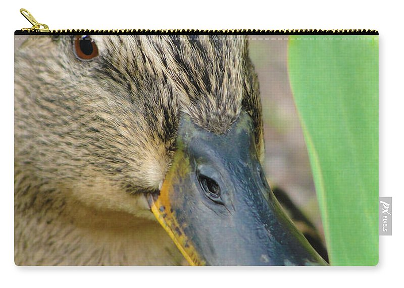 Duck Carry-all Pouch featuring the photograph Hide And Seek by Tiffany Erdman