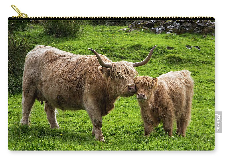 Horned Carry-all Pouch featuring the photograph Highland Cattle And Calf by John Short / Design Pics