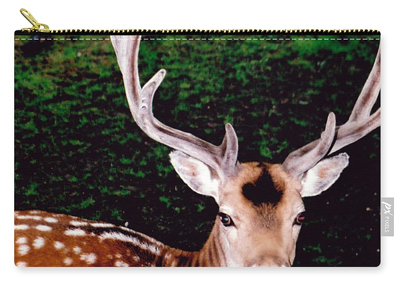 Animal Carry-all Pouch featuring the photograph His Majesty by Glenn Aker