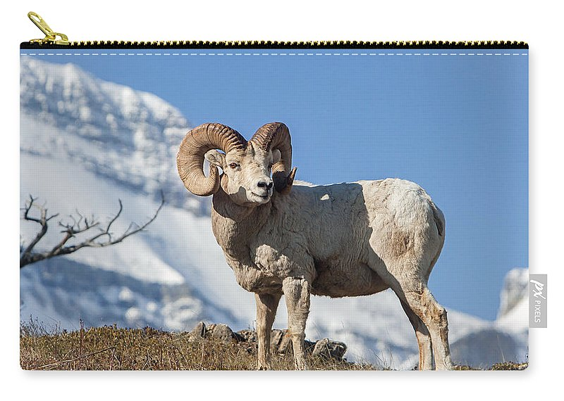 Big Horn Ram Carry-all Pouch featuring the photograph His Majesty by Jack Bell
