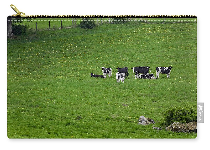 Cow Carry-all Pouch featuring the photograph Holsteins by Bill Wakeley