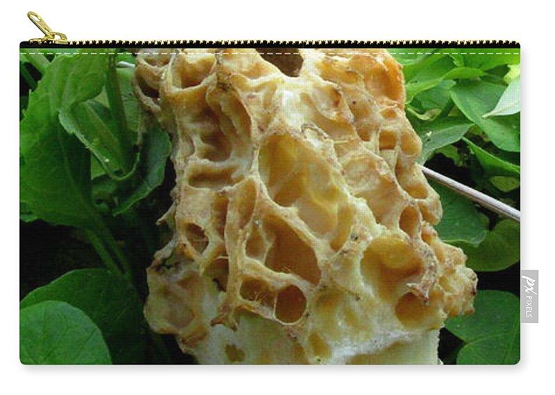 Holy Morel Mushroom North American Edible Fungi Chesapeake Bay Region Mushrooms Mycology Northeast Fungi Species Mid Atlantic Mushrooms Seasonal Woodland Flora Carry-all Pouch featuring the photograph Holy Morel by Joshua Bales