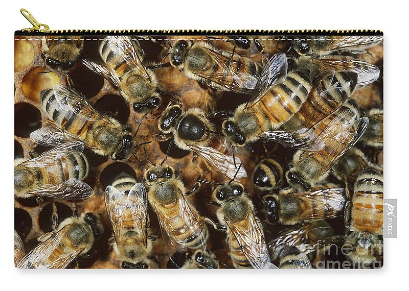 Honeybee Carry-all Pouch featuring the photograph Honeybees With Queen by Scott Camazine