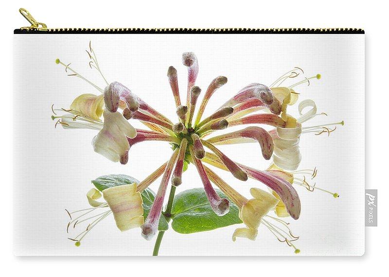 Honeysuckle Carry-all Pouch featuring the photograph Honeysuckle by Ann Garrett