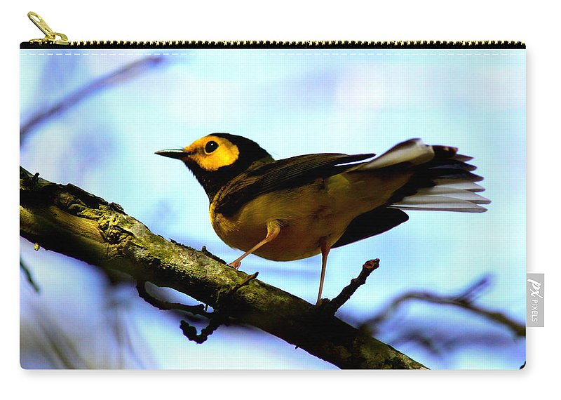 Bird Carry-all Pouch featuring the photograph Hooded Warbler - Img 9290-002 by Travis Truelove