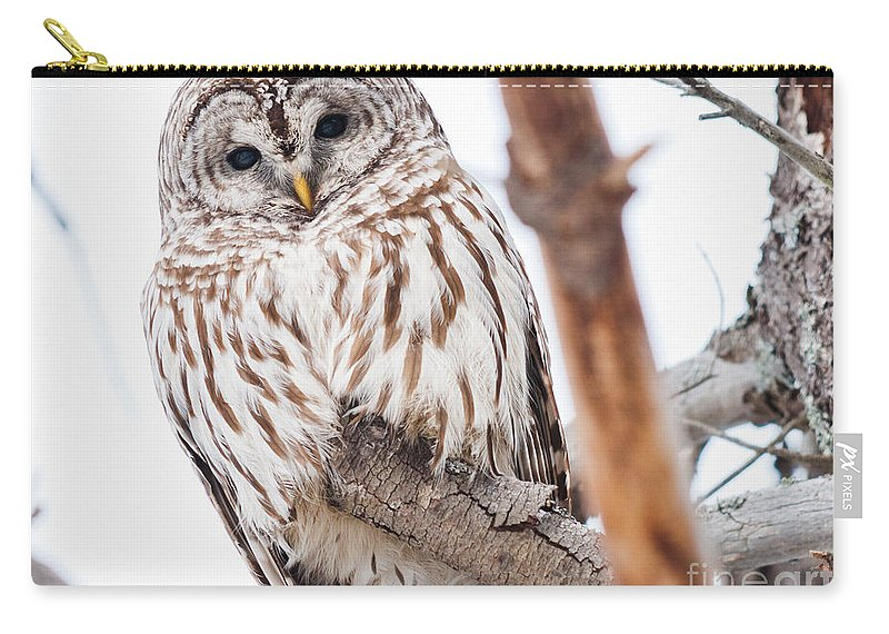 Owls Carry-all Pouch featuring the photograph Hoot Hoot by Cheryl Baxter