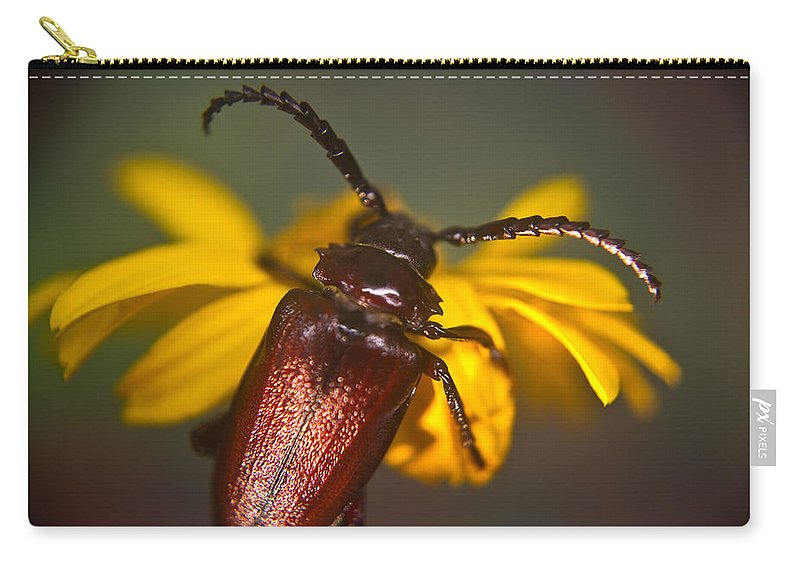 Horned Carry-all Pouch featuring the photograph Horned Beetle by Douglas Barnett