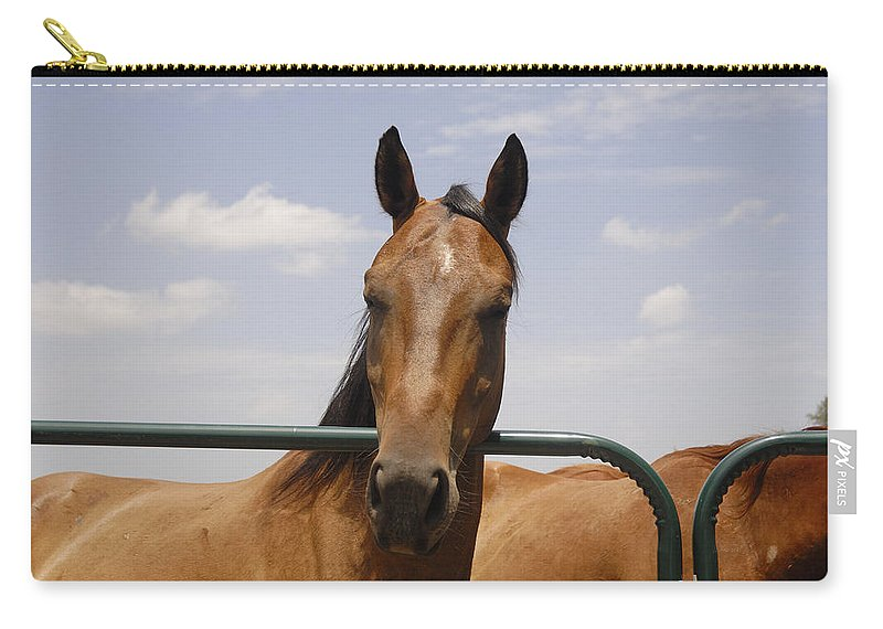 Horse Carry-all Pouch featuring the photograph Horse Beauty by Charles Beeler