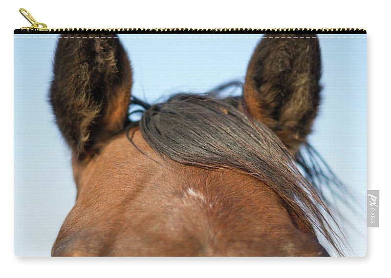 Horse Carry-all Pouch featuring the photograph Horse Standing In Pasture In Autumn by Chris Hendrickson