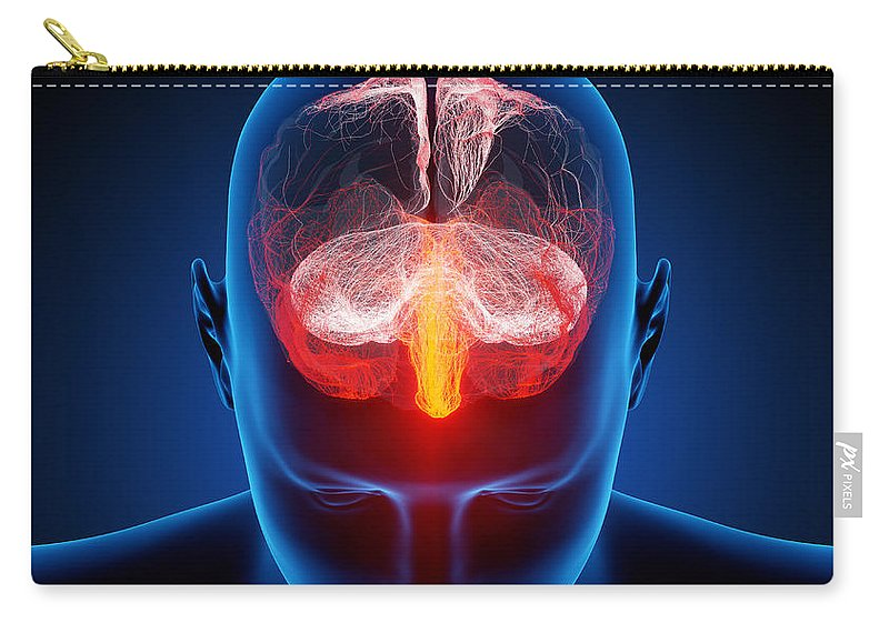Brain Carry-all Pouch featuring the photograph Human Brain by Johan Swanepoel