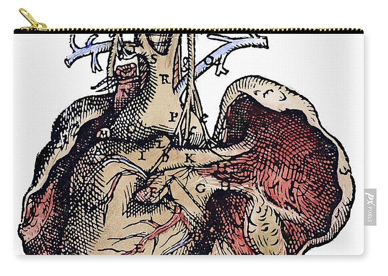 1543 Carry-all Pouch featuring the photograph Human Heart, 1543 by Granger