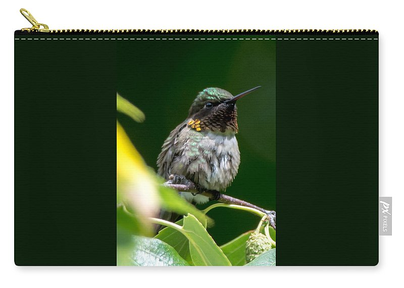 Bird Carry-all Pouch featuring the photograph Humming Bird by Richard Kitchen