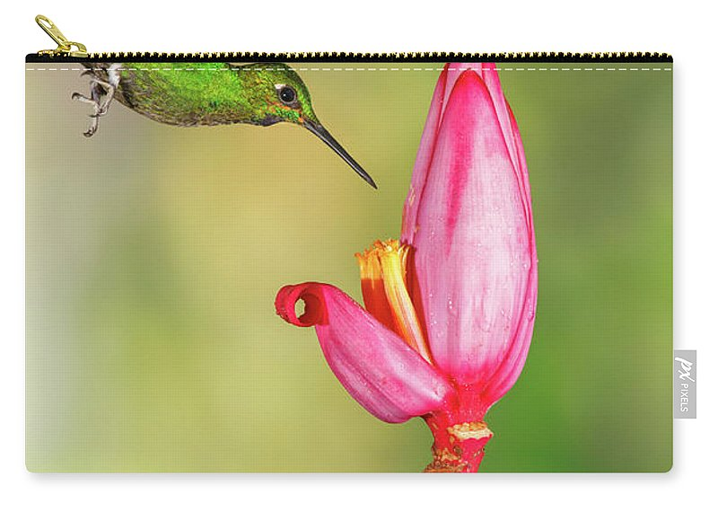 Green-crowned Brilliant Carry-all Pouch featuring the photograph Hummingbird , Green-crowned Brilliant by Kencanning