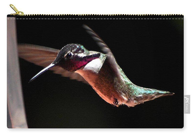 Hummingbird Carry-all Pouch featuring the photograph Hummingbird Male Costa's Decending by Jay Milo