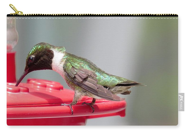 Hummingbird Carry-all Pouch featuring the photograph Hummingbird by Zina Stromberg