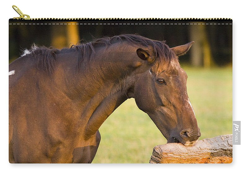 Pony Carry-all Pouch featuring the photograph Hungry by Angel Ciesniarska