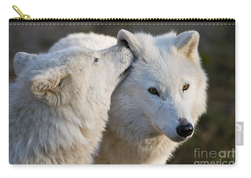 Arctic Wolf Photography Carry-all Pouch featuring the photograph I Have A Secret by Wolves Only