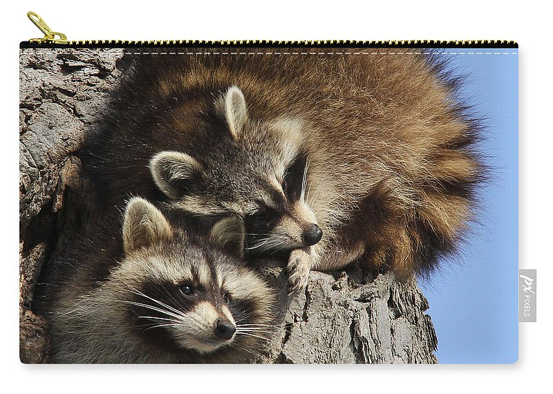 Raccoon Carry-all Pouch featuring the photograph I Love You Too by Doris Potter