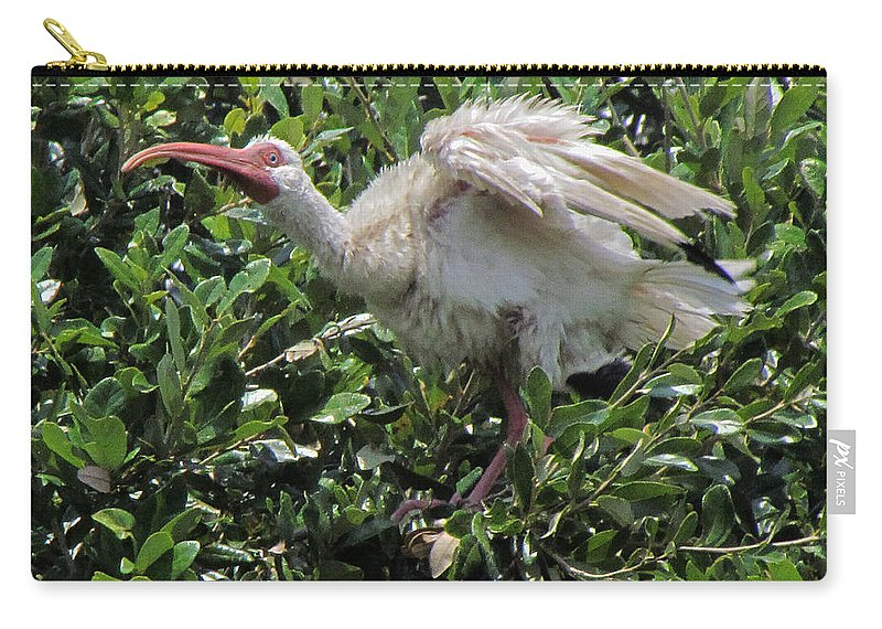 Ibis Carry-all Pouch featuring the photograph Ibis 12 by J M Farris Photography