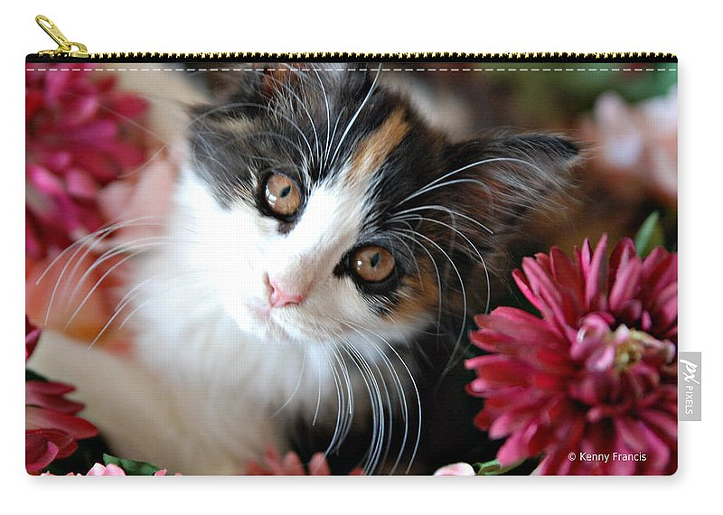 Cats Carry-all Pouch featuring the photograph I'm Just So Adorable by Kenny Francis