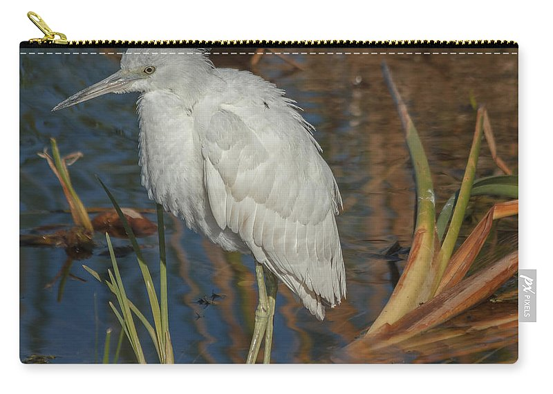 Florida Carry-all Pouch featuring the photograph Immature Little Blue Heron by Jane Luxton