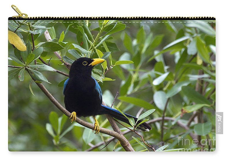 Bird Carry-all Pouch featuring the photograph Immature Yucatan Jay by Teresa Zieba