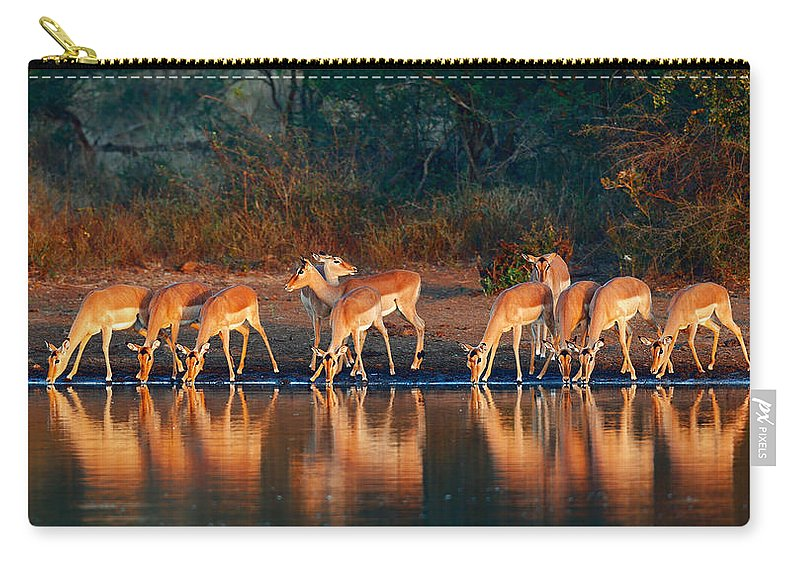 Impala Carry-all Pouch featuring the photograph Impala Herd With Reflections In Water by Johan Swanepoel