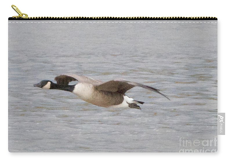 Canadian Geese Carry-all Pouch featuring the photograph In Coming by William Norton