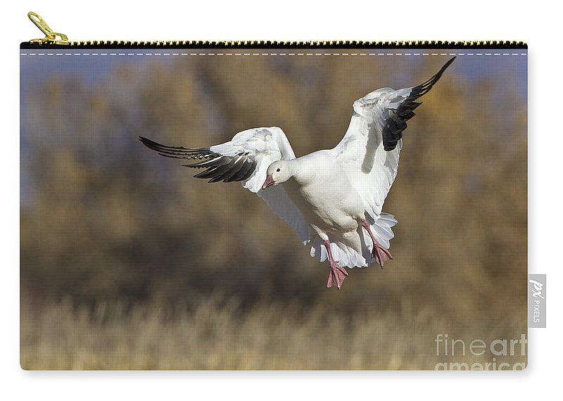 Bird Carry-all Pouch featuring the photograph Incoming Snow Goose by Bryan Keil