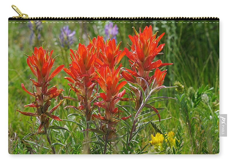 Colorado Photographs Carry-all Pouch featuring the photograph Indian Paint Brush by Gary Benson