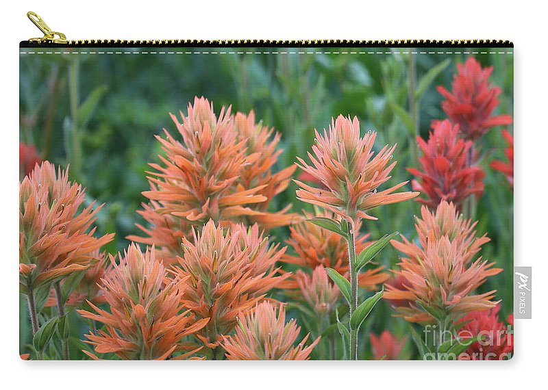 Indian Paintbrush Carry-all Pouch featuring the photograph Indian Paintbrush by Marty Fancy