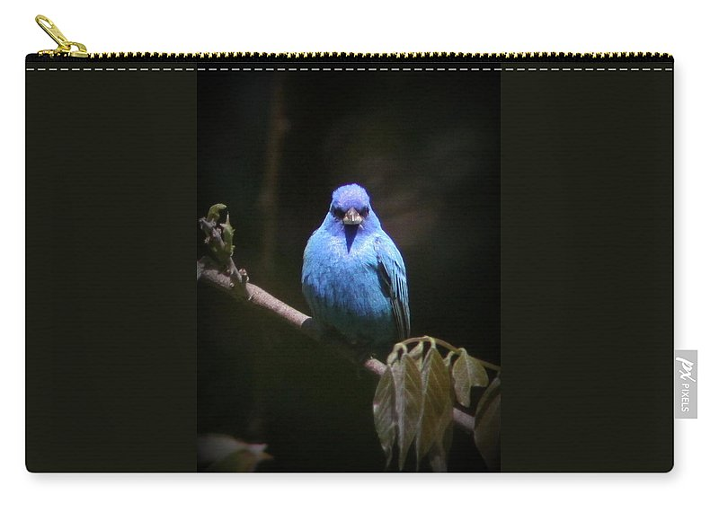 Indigo Bunting Carry-all Pouch featuring the photograph Indigo Bunting - Img 430-025 by Travis Truelove