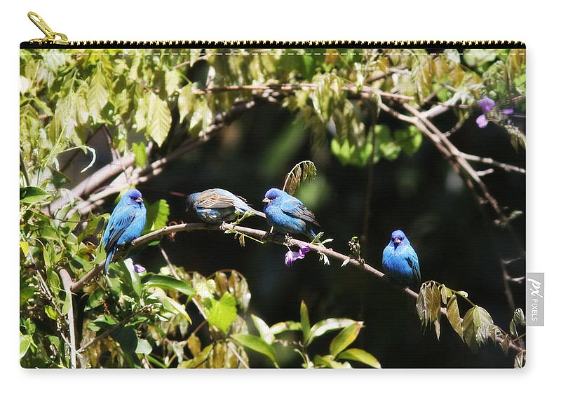 Indigo Bunting Carry-all Pouch featuring the photograph Indigo Bunting - Img 431-013 by Travis Truelove