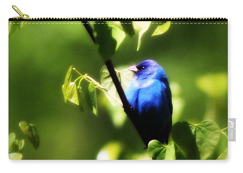Indigo Bunting Carry-all Pouch featuring the photograph Indigo Bunting - Img_459-002 by Travis Truelove