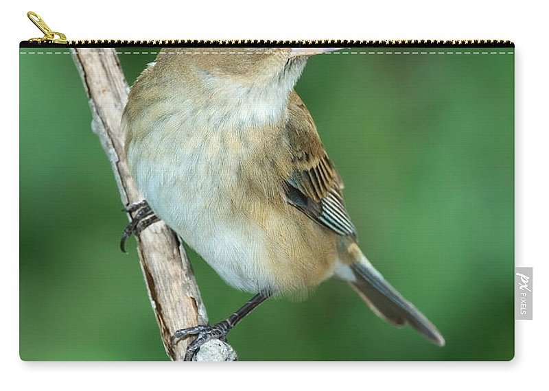 Fauna Carry-all Pouch featuring the photograph Indigo Bunting Passerina Cyanea Female by Anthony Mercieca