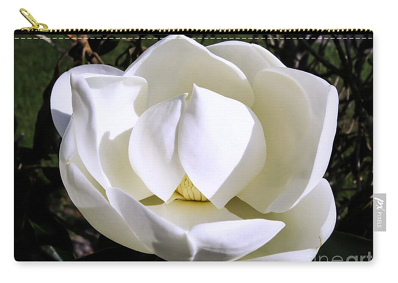 Bull Bay Carry-all Pouch featuring the photograph Innocence      by Zina Stromberg