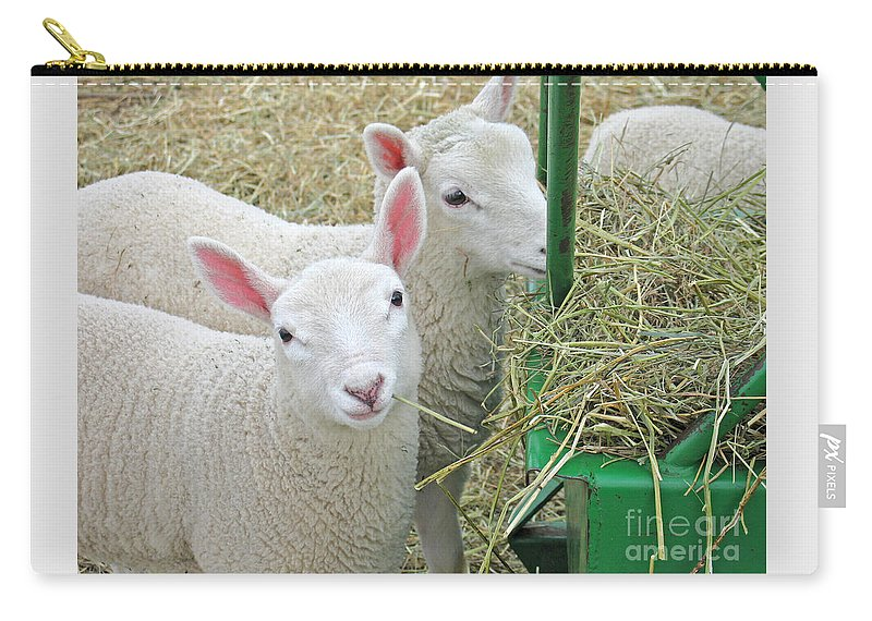 Lamb Carry-all Pouch featuring the photograph Innocence by Ann Horn