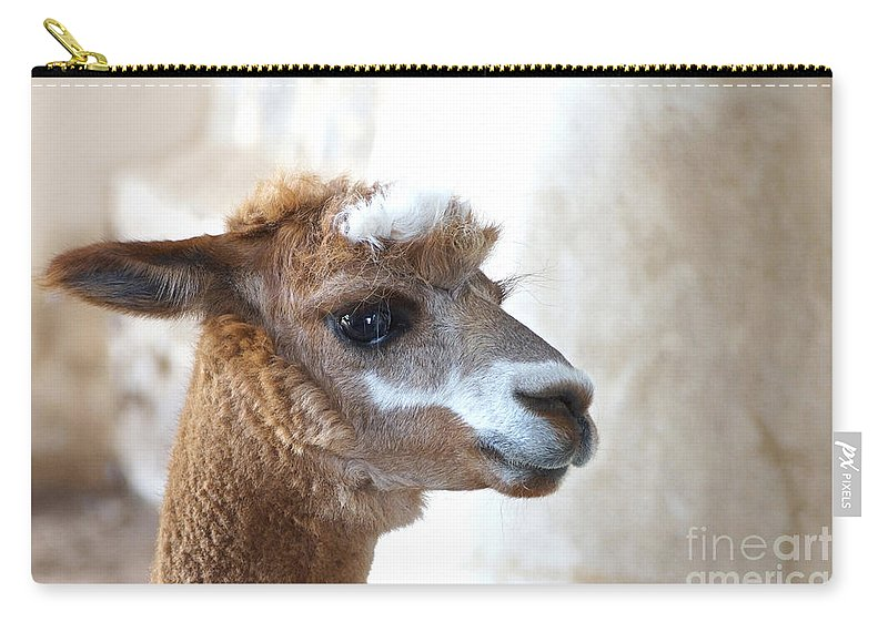 Female Alpaca Carry-all Pouch featuring the photograph Innocence by Byron Varvarigos