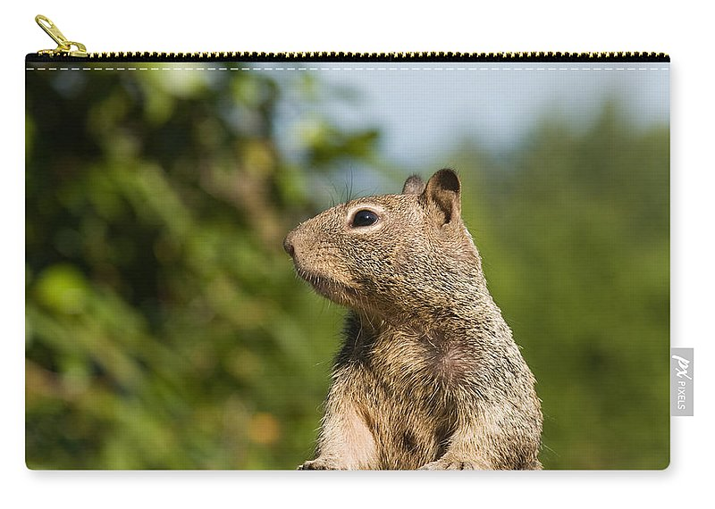 Squirrel Carry-all Pouch featuring the photograph Inquestivie Squirrel by Donna Haggerty