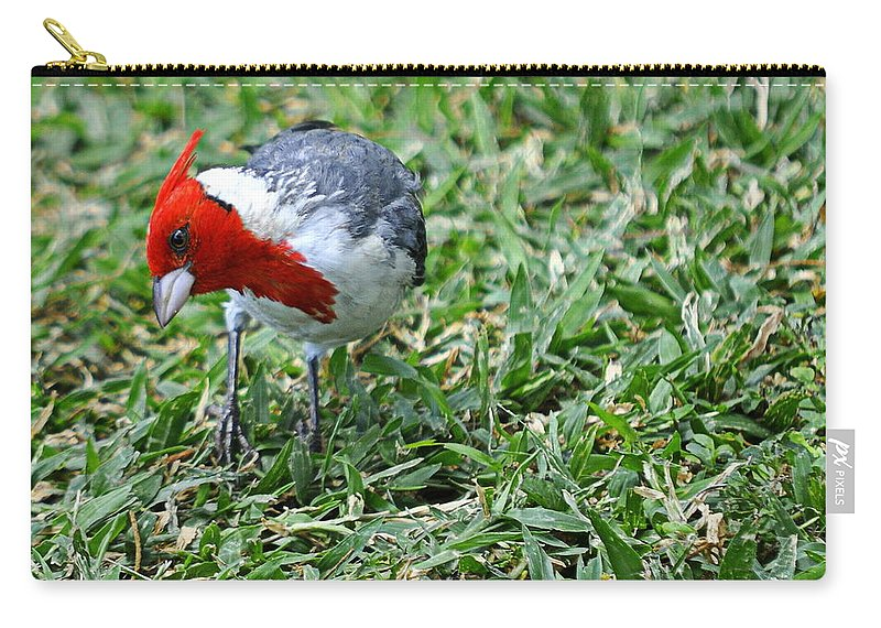 Bird Carry-all Pouch featuring the photograph Inquisitive Redhead by AJ Schibig