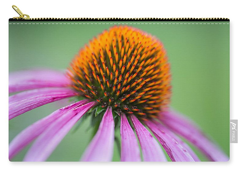 Purple Cone Flower Carry-all Pouch featuring the photograph Intimate View by Dale Kincaid