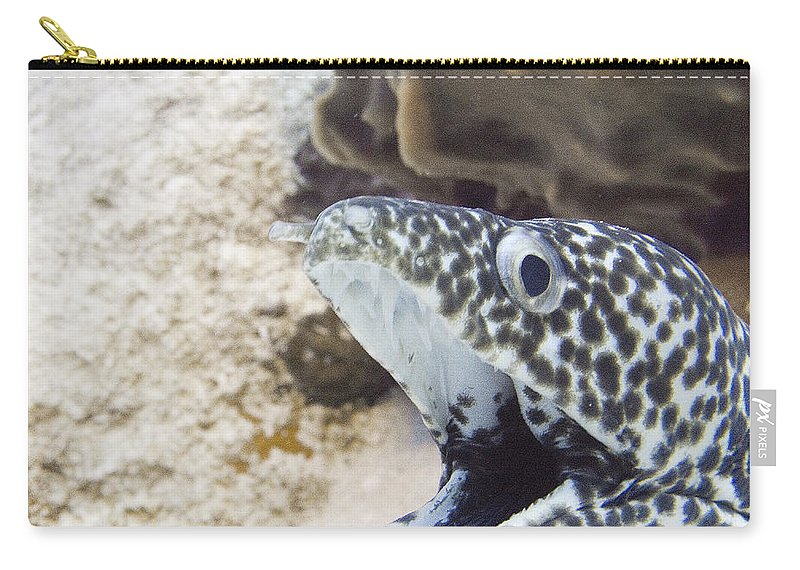 Moray Carry-all Pouch featuring the photograph It's A Moray by Jim Murphy
