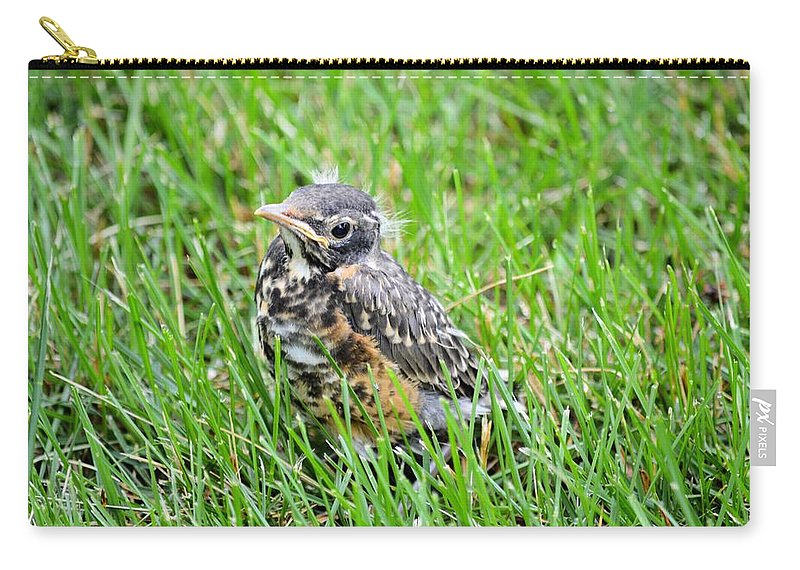 Robin Carry-all Pouch featuring the photograph I've Fallen And Can't Get Up by Bonfire Photography
