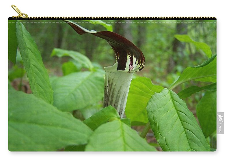 Arisaema Triphyllum Carry-all Pouch featuring the photograph Jack In The Pulpit by William Tanneberger