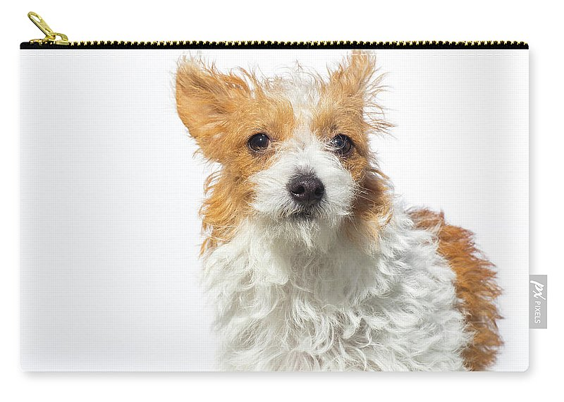 Pets Carry-all Pouch featuring the photograph Jack Russell Terrier - The Amanda by Amandafoundation.org