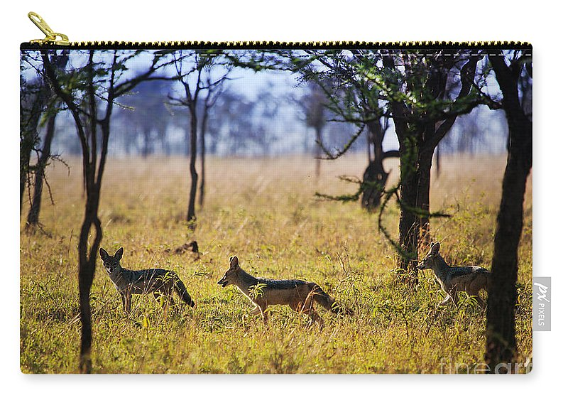 Serengeti Carry-all Pouch featuring the photograph Jackals On Savanna. Safari In Serengeti. Tanzania. Africa by Michal Bednarek